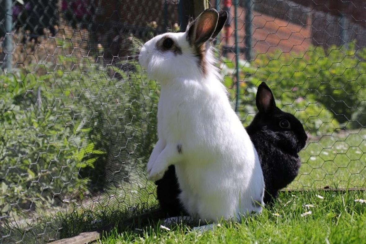 Für kaninchen pflanzen ungiftige Forum für